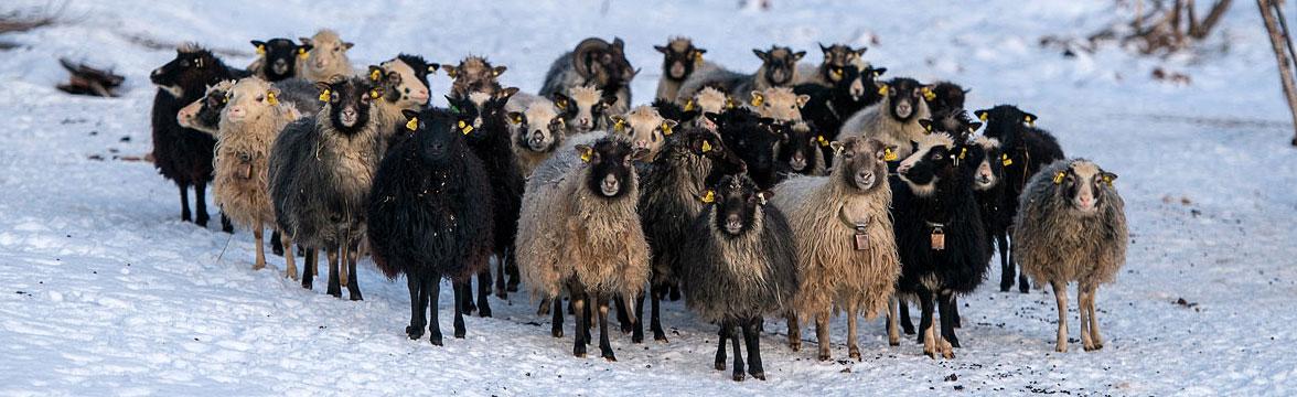 Norwegian Wool
